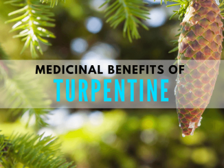 Turpentine as a medicine